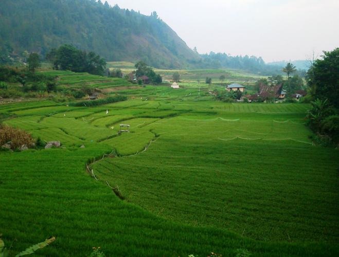 hariansib_Minim-Pengairan--Puluhan-Ha-Ladang-dan-Sawah-di-Desa-Bonandolok-2-Terbengkalai